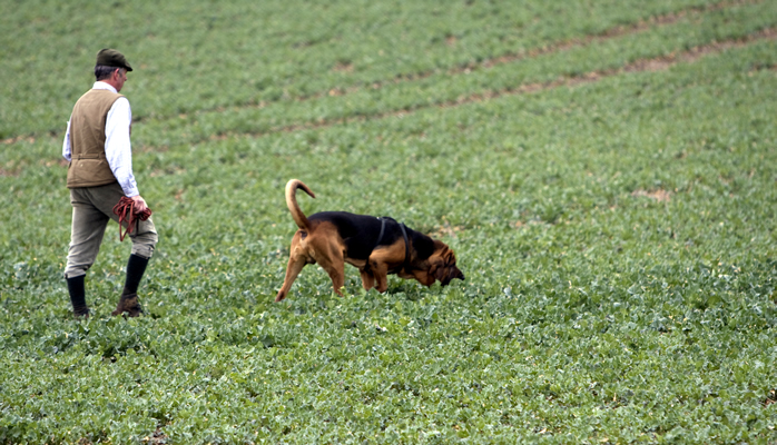 Hunting dog photo as analogy to finding your church site via a search engine